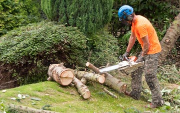 additional services offered by Brentwood tree surgeons