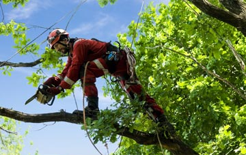 find trusted rated Brentwood tree surgeons in Essex