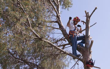 reasons to consider Brentwood tree surgery