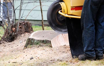 rated Brentwood tree stump removal companies