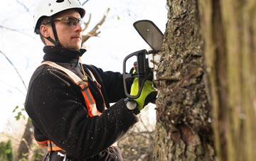 Brentwood tree surgery costs
