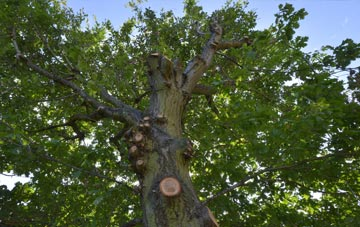 what is Brentwood tree surgery?