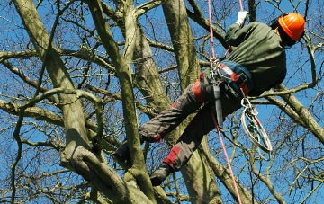 tree surgery Brentwood, Essex