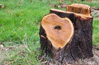 free Brentwood tree stump removal quotes
