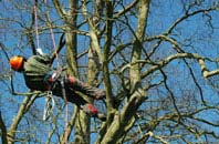 Brentwood tree surgery services