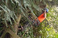free Brentwood tree surgery quotes